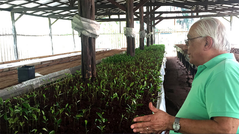Sergio Vergueiro - Conheça a EcoNut: A Castanha do Brasil - Pará orgânica