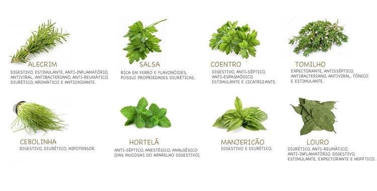 Resultado de imagem para ervas e seus beneficios